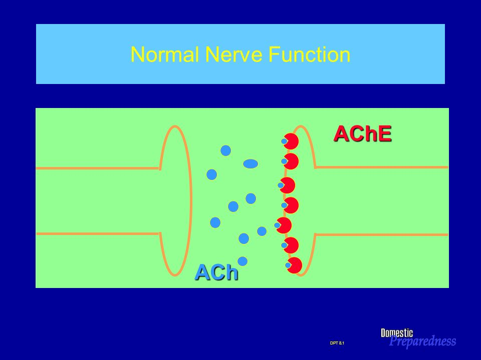DPT 8.1 Normal Nerve Function ACh AChE