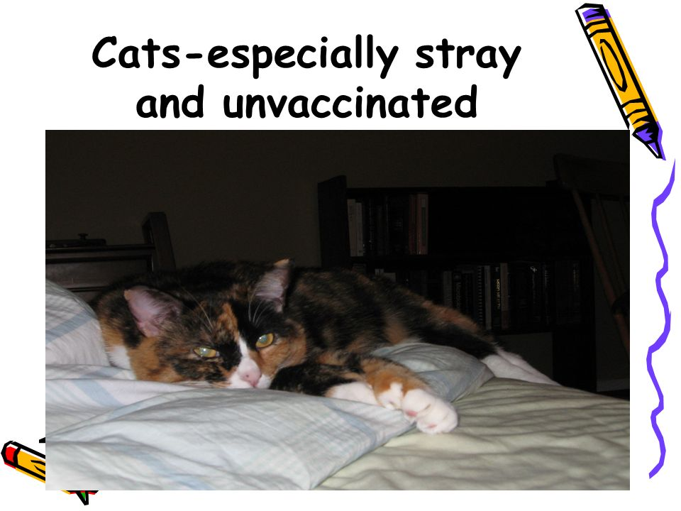 Cats-especially stray and unvaccinated