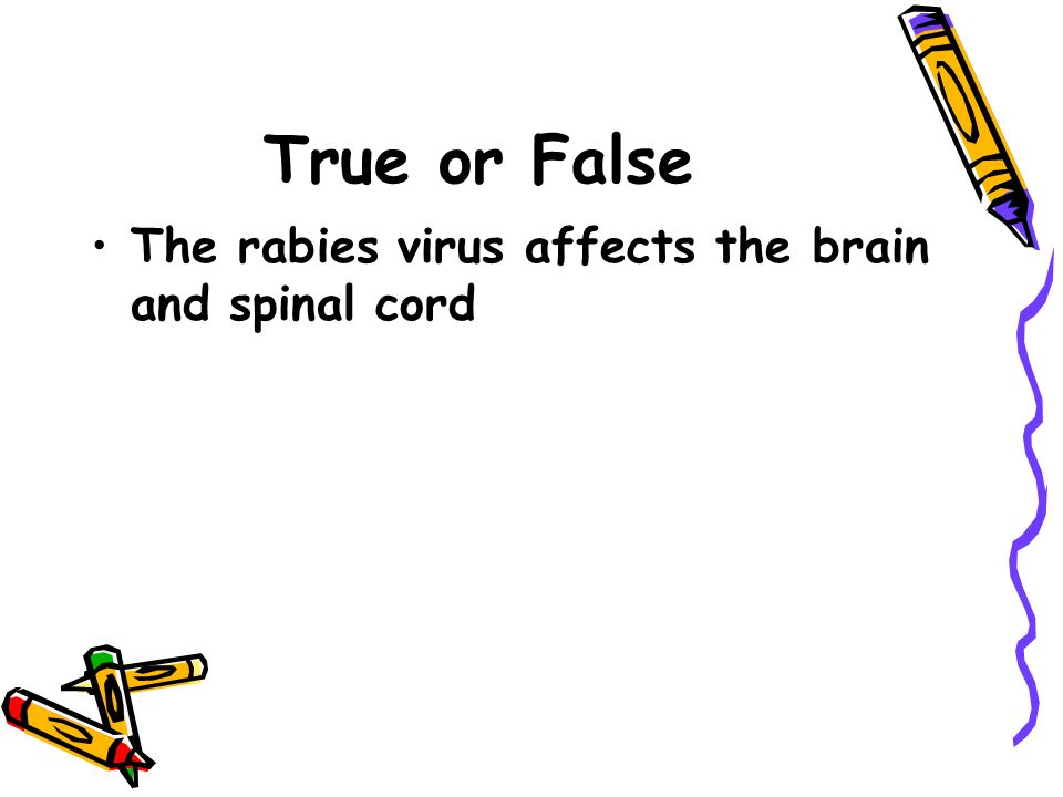 True or False The rabies virus affects the brain and spinal cord