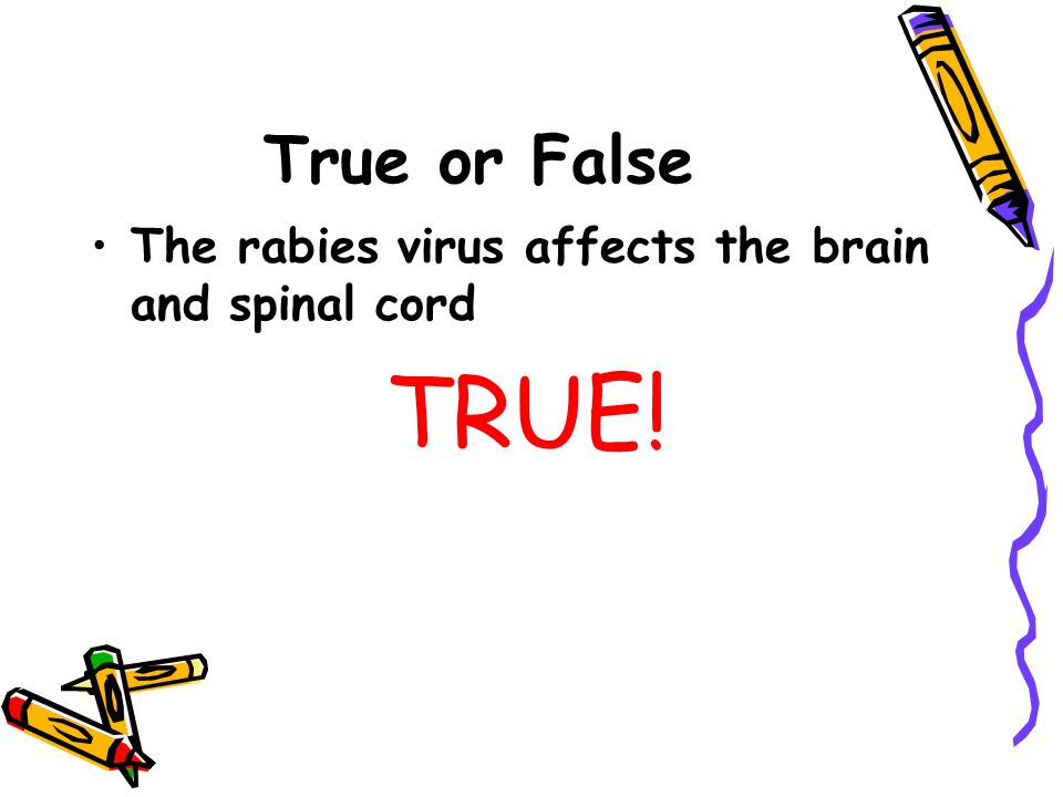 True or False The rabies virus affects the brain and spinal cord TRUE!