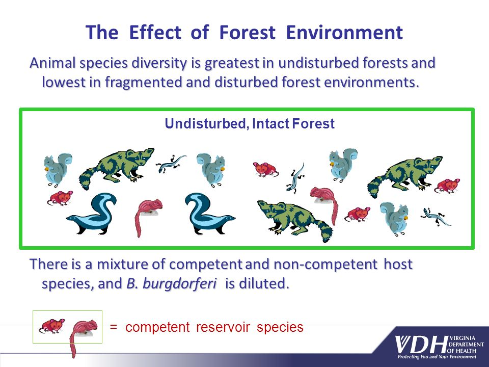Animal species diversity is greatest in undisturbed forests and lowest in fragmented and disturbed forest environments.