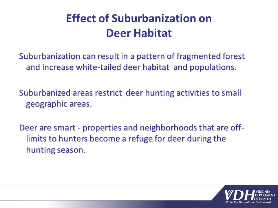 Suburbanization can result in a pattern of fragmented forest and increase white-tailed deer habitat and populations.