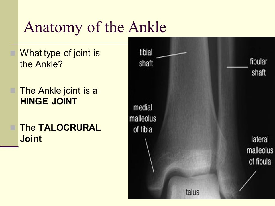 Anatomy of the Ankle What type of joint is the Ankle? The Ankle joint is a HINGE JOINT The TALOCRURAL Joint