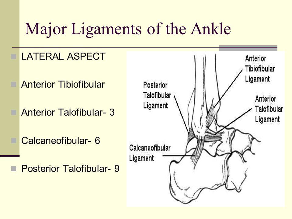 Major Ligaments of the Ankle LATERAL ASPECT Anterior Tibiofibular Anterior Talofibular- 3 Calcaneofibular- 6 Posterior Talofibular- 9