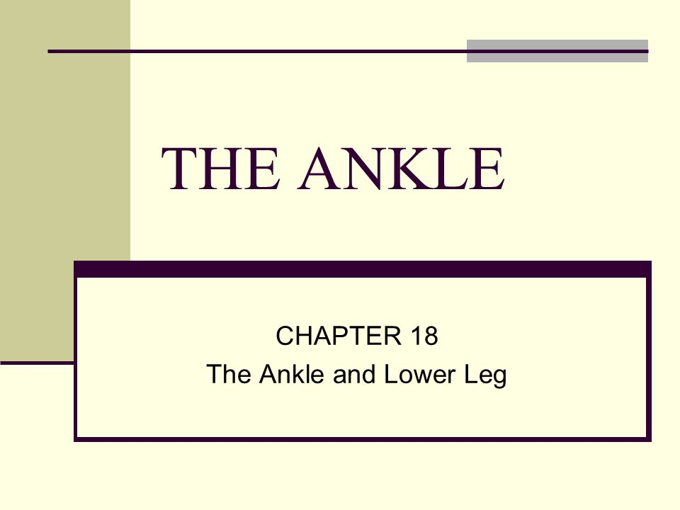 THE ANKLE CHAPTER 18 The Ankle and Lower Leg