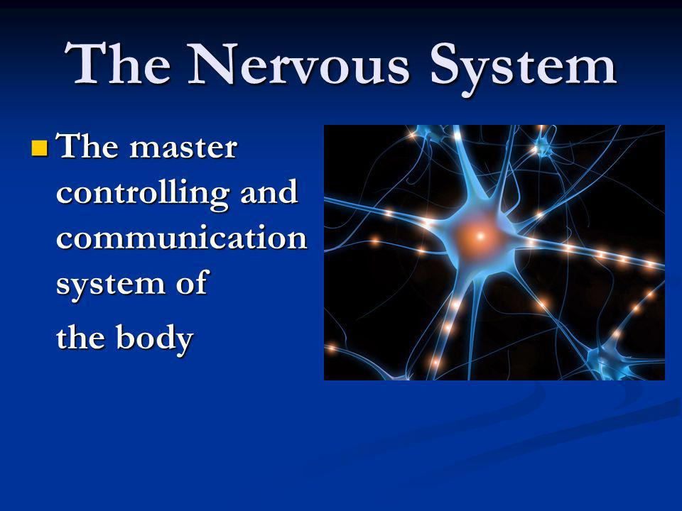 The master controlling and communication system of The master controlling and communication system of the body