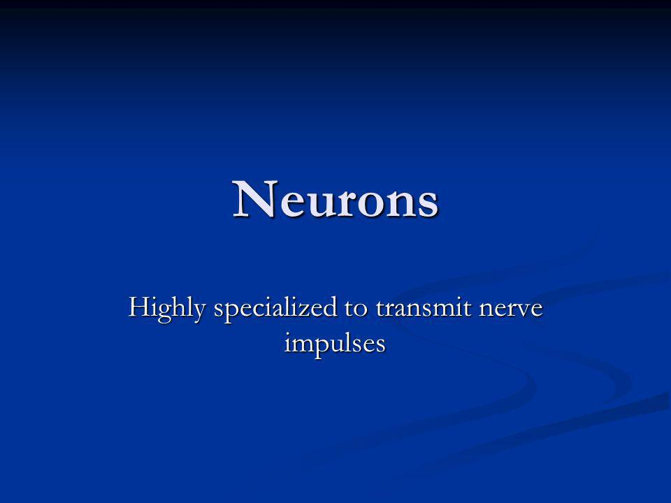 Neurons Highly specialized to transmit nerve impulses