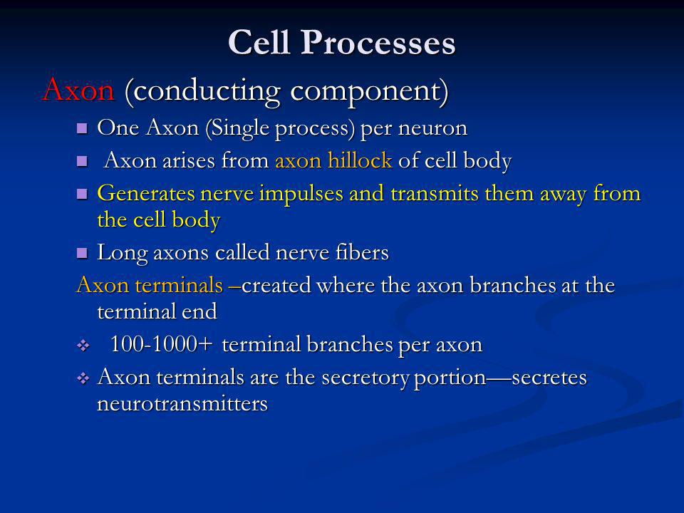 Cell Processes Axon (conducting component) One Axon (Single process) per neuron One Axon (Single process) per neuron Axon arises from axon hillock of