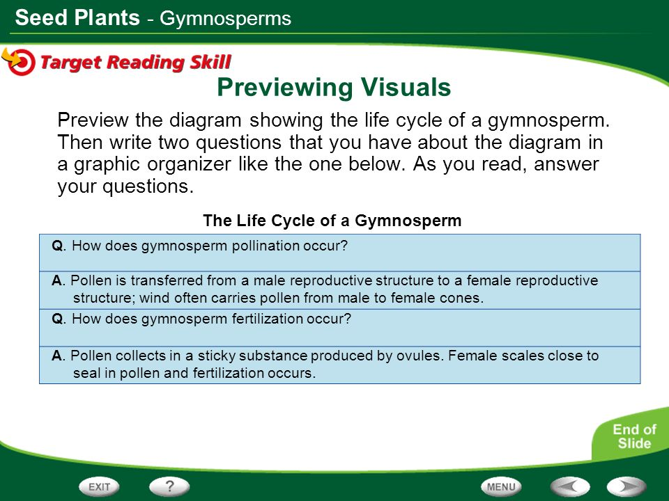 Seed Plants Previewing Visuals Preview the diagram showing the life cycle of a gymnosperm. Then write two questions that you have about the diagram in
