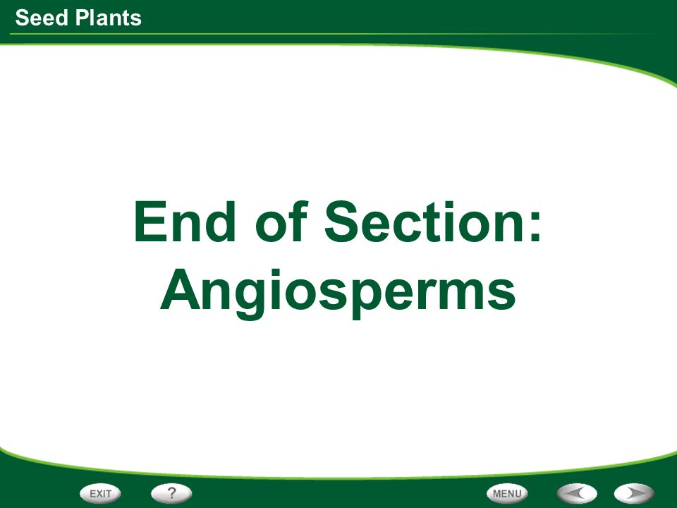 Seed Plants End of Section: Angiosperms