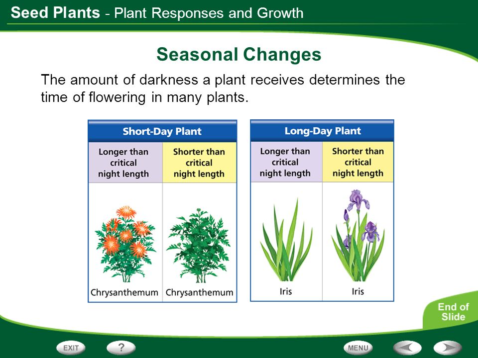 Seed Plants - Plant Responses and Growth Seasonal Changes The amount of darkness a plant receives determines the time of flowering in many plants.