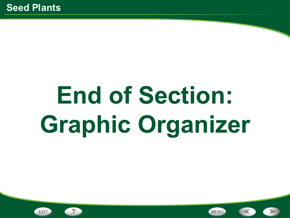 Seed Plants End of Section: Graphic Organizer