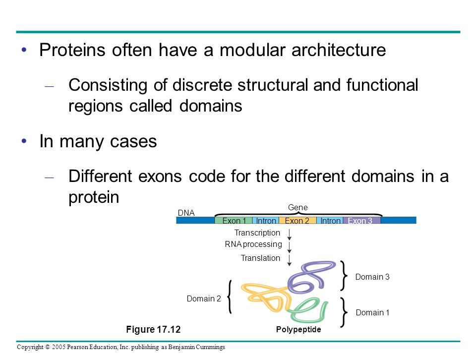 Copyright © 2005 Pearson Education, Inc. publishing as Benjamin Cummings Proteins often have a modular architecture – Consisting of discrete structura