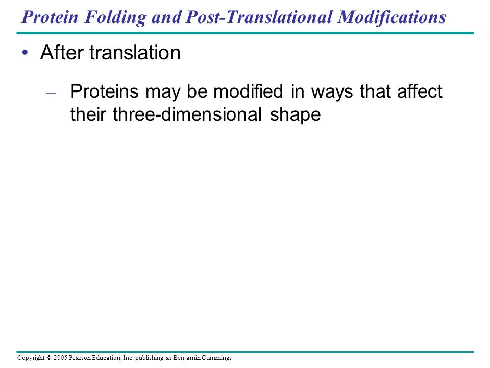 Copyright © 2005 Pearson Education, Inc. publishing as Benjamin Cummings Protein Folding and Post-Translational Modifications After translation – Prot