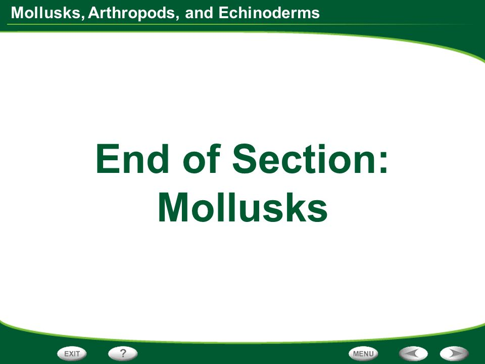Mollusks, Arthropods, and Echinoderms End of Section: Mollusks
