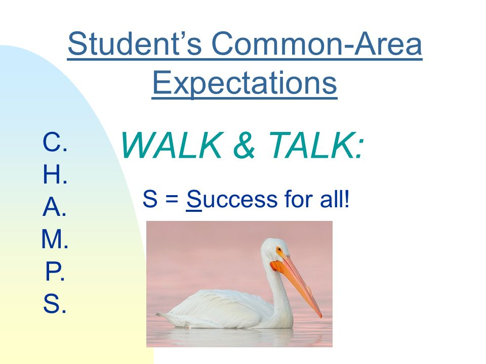 Students Common-Area Expectations S = Success for all! C. H. A. M. P. S. WALK & TALK: