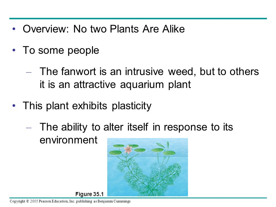 Copyright © 2005 Pearson Education, Inc. publishing as Benjamin Cummings Overview: No two Plants Are Alike To some people – The fanwort is an intrusiv