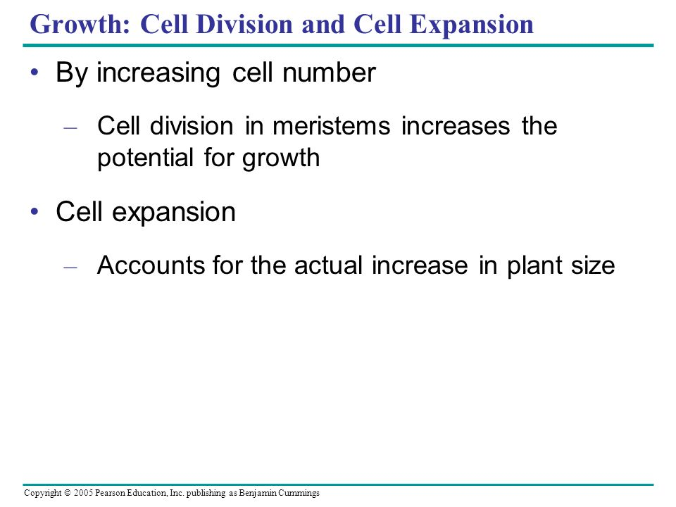 Copyright © 2005 Pearson Education, Inc. publishing as Benjamin Cummings Growth: Cell Division and Cell Expansion By increasing cell number – Cell div