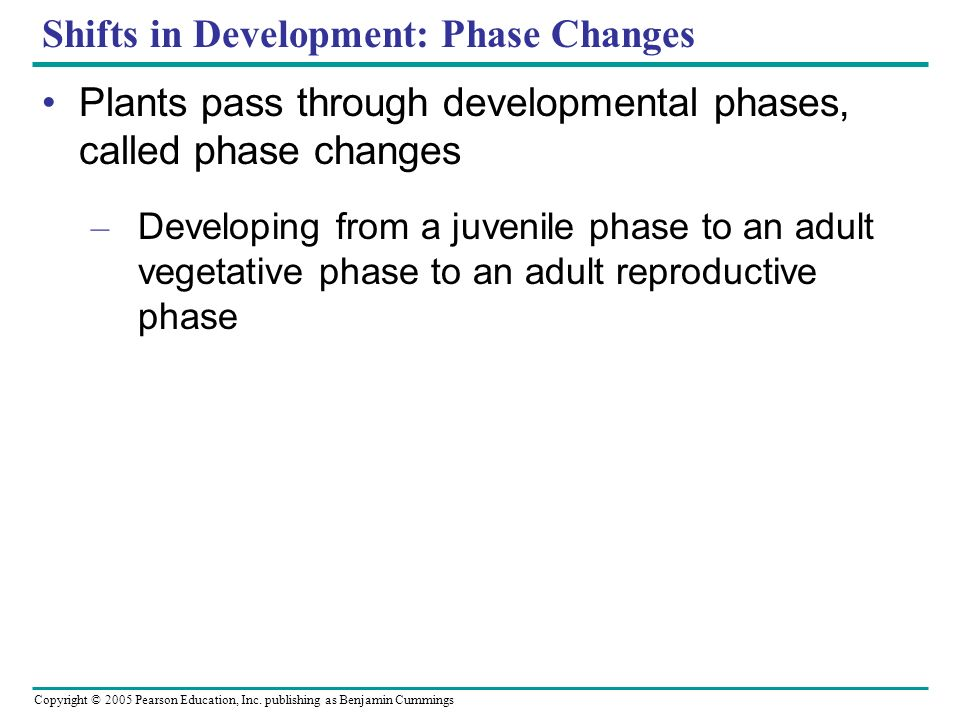 Copyright © 2005 Pearson Education, Inc. publishing as Benjamin Cummings Shifts in Development: Phase Changes Plants pass through developmental phases