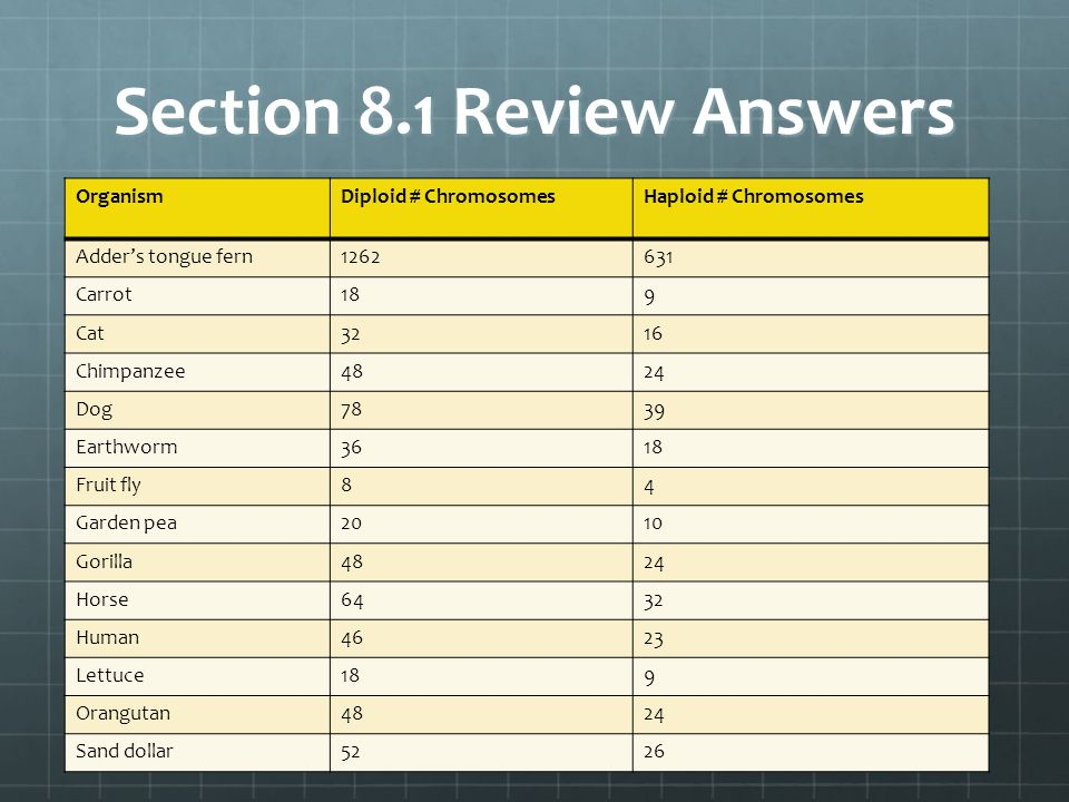Section 8.1 Review Answers OrganismDiploid # ChromosomesHaploid # Chromosomes Adders tongue fern1262631 Carrot189 Cat3216 Chimpanzee4824 Dog7839 Earth