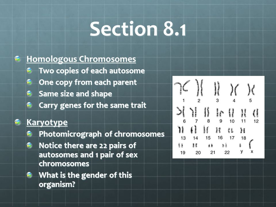 Section 8.1 Homologous Chromosomes Two copies of each autosome One copy from each parent Same size and shape Carry genes for the same trait Karyotype