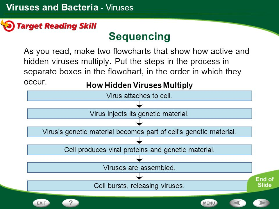 Viruses and Bacteria Sequencing As you read, make two flowcharts that show how active and hidden viruses multiply. Put the steps in the process in sep