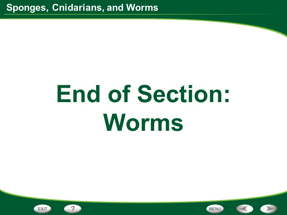 Sponges, Cnidarians, and Worms End of Section: Worms