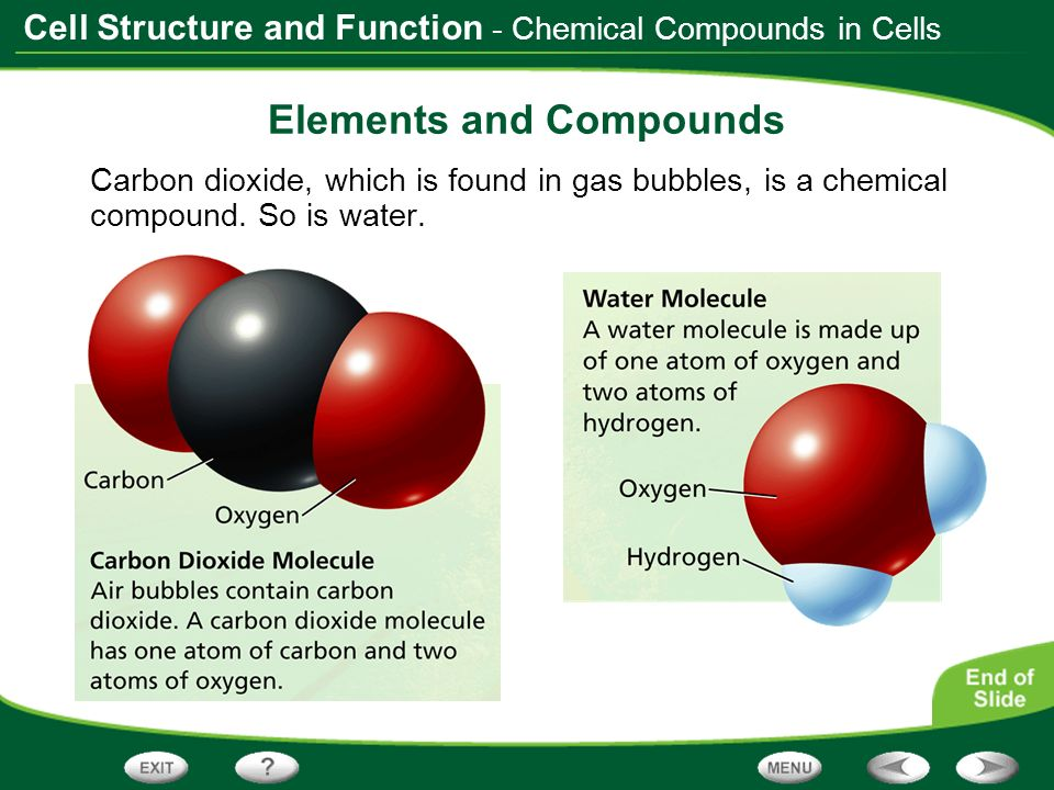 Cell Structure and Function - Chemical Compounds in Cells Elements and Compounds Carbon dioxide, which is found in gas bubbles, is a chemical compound