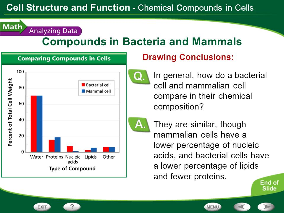 Cell Structure and Function Compounds in Bacteria and Mammals They are similar, though mammalian cells have a lower percentage of nucleic acids, and b