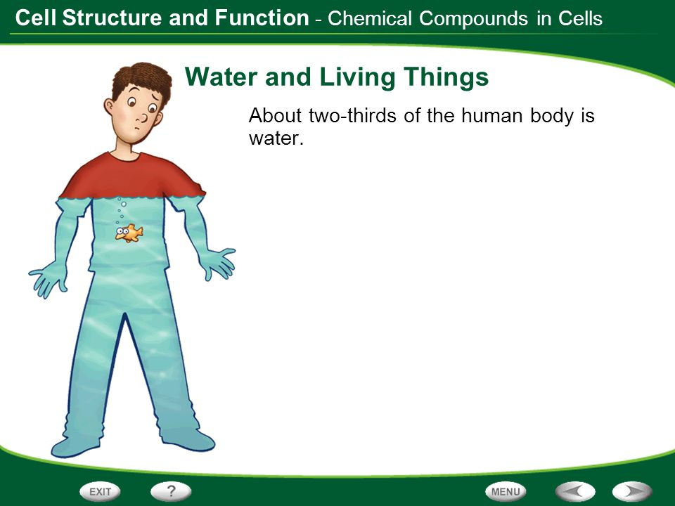 Cell Structure and Function Water and Living Things About two-thirds of the human body is water. - Chemical Compounds in Cells