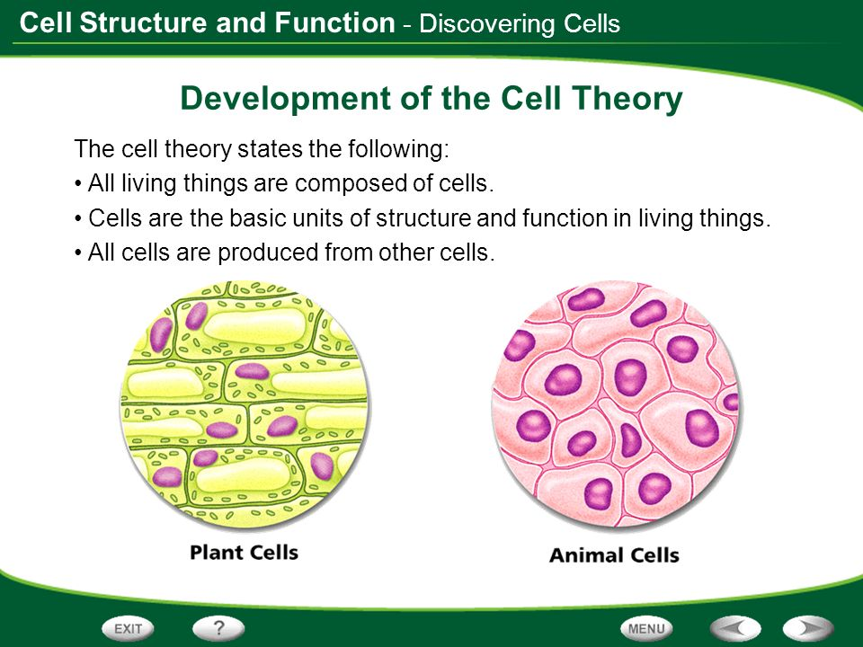 Cell Structure and Function - Discovering Cells Development of the Cell Theory The cell theory states the following: All living things are composed of