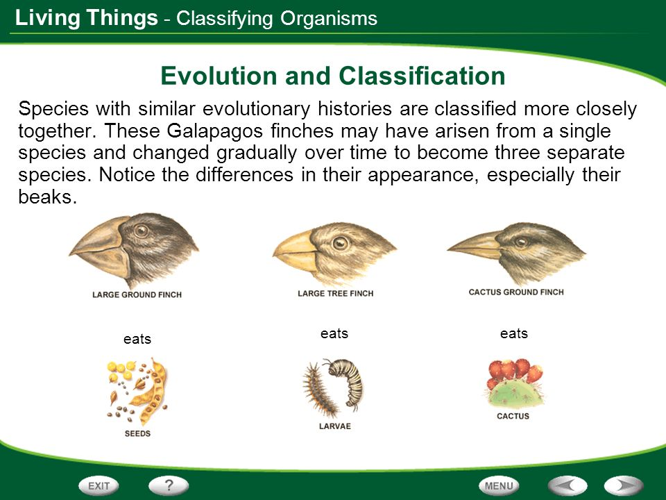 Living Things eats Evolution and Classification Species with similar evolutionary histories are classified more closely together. These Galapagos finc