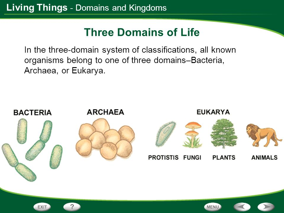 Classification Of Living Organisms 3 Domains