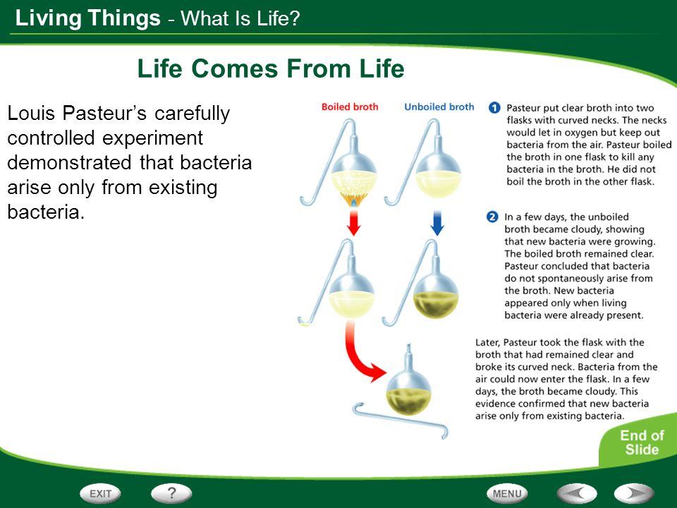 Living Things Life Comes From Life Louis Pasteurs carefully controlled experiment demonstrated that bacteria arise only from existing bacteria. - What
