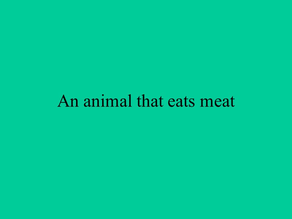 An animal that eats meat