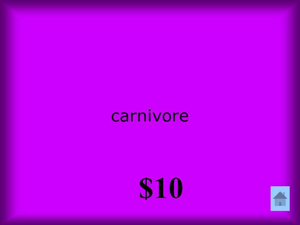 carnivore $10