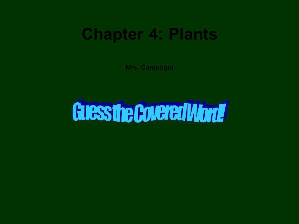 Chapter 4: Plants Mrs. Campogni