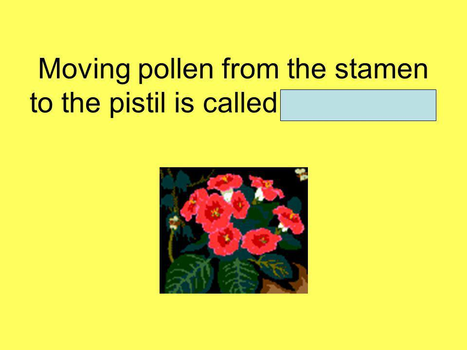 Moving pollen from the stamen to the pistil is called pollination.