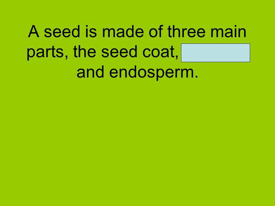 A seed is made of three main parts, the seed coat, embryo, and endosperm.
