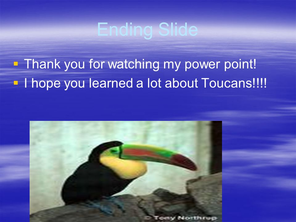 Facts A Toucan has iridescent blue feet. A Toucan has a red tail. A Toucan has a rainbow colored beak. A Toucan has a yellow head and a chest with a r