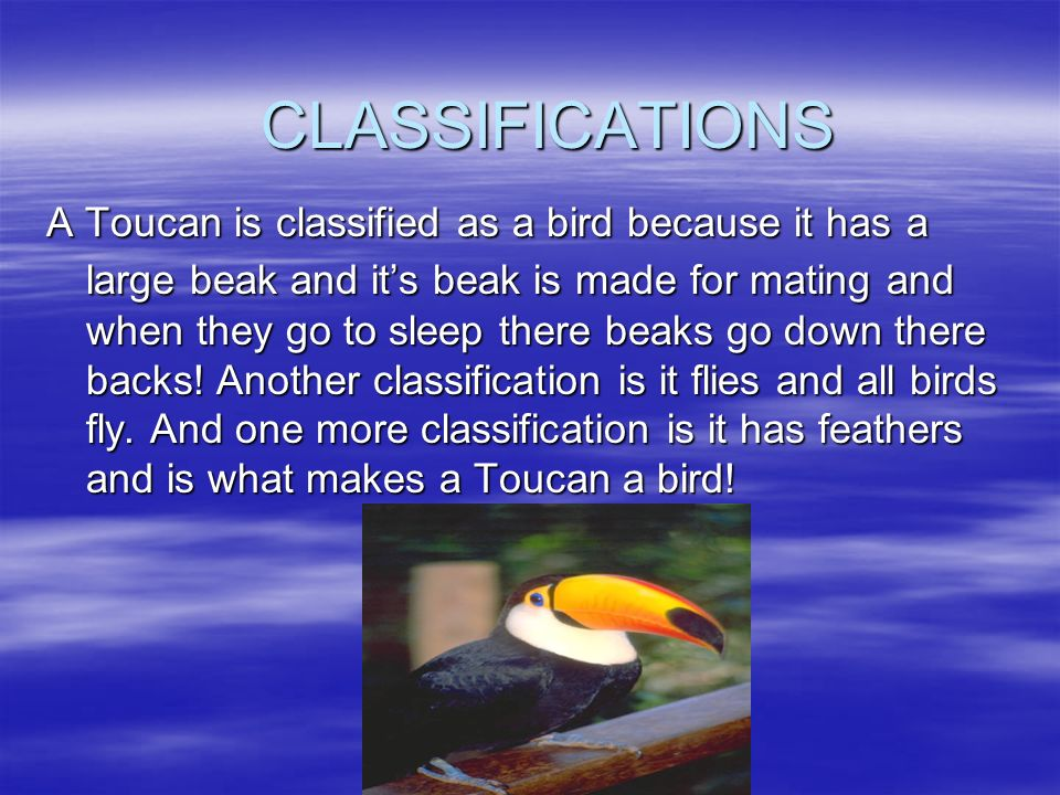 CHARACTERISTICS My animal is classified as a bird because: My animal is classified as a bird because: It has feathers. It has feathers. It breathes wi