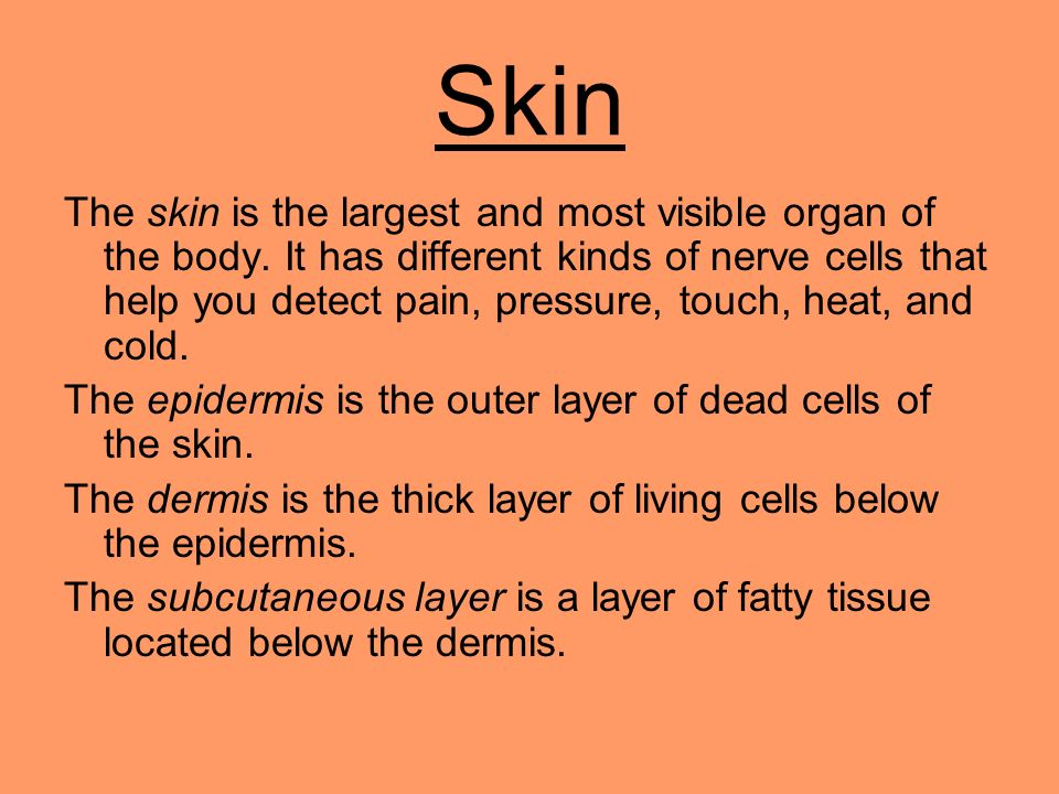 Skin The skin is the largest and most visible organ of the body. It has different kinds of nerve cells that help you detect pain, pressure, touch, hea