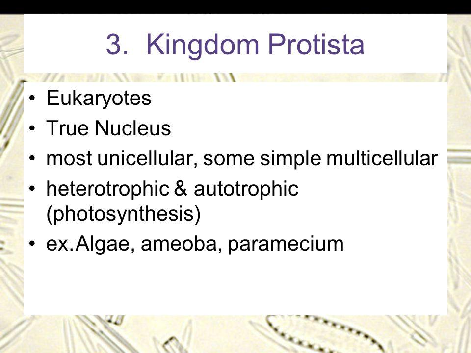 3. Kingdom Protista Eukaryotes True Nucleus most unicellular, some simple multicellular heterotrophic & autotrophic (photosynthesis) ex.Algae, ameoba,