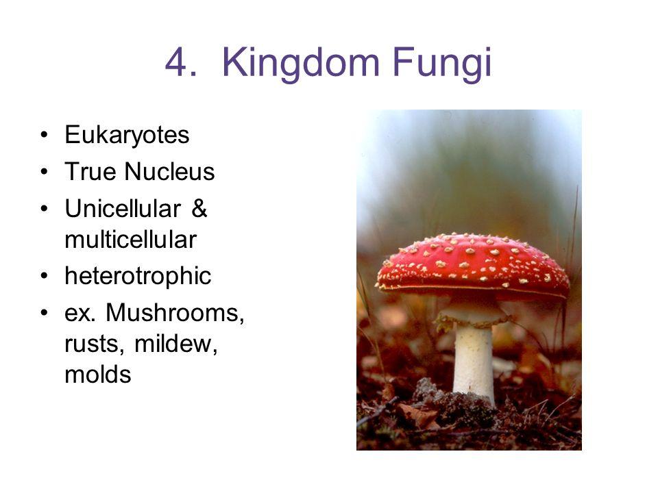 4. Kingdom Fungi Eukaryotes True Nucleus Unicellular & multicellular heterotrophic ex.Mushrooms, rusts, mildew, molds