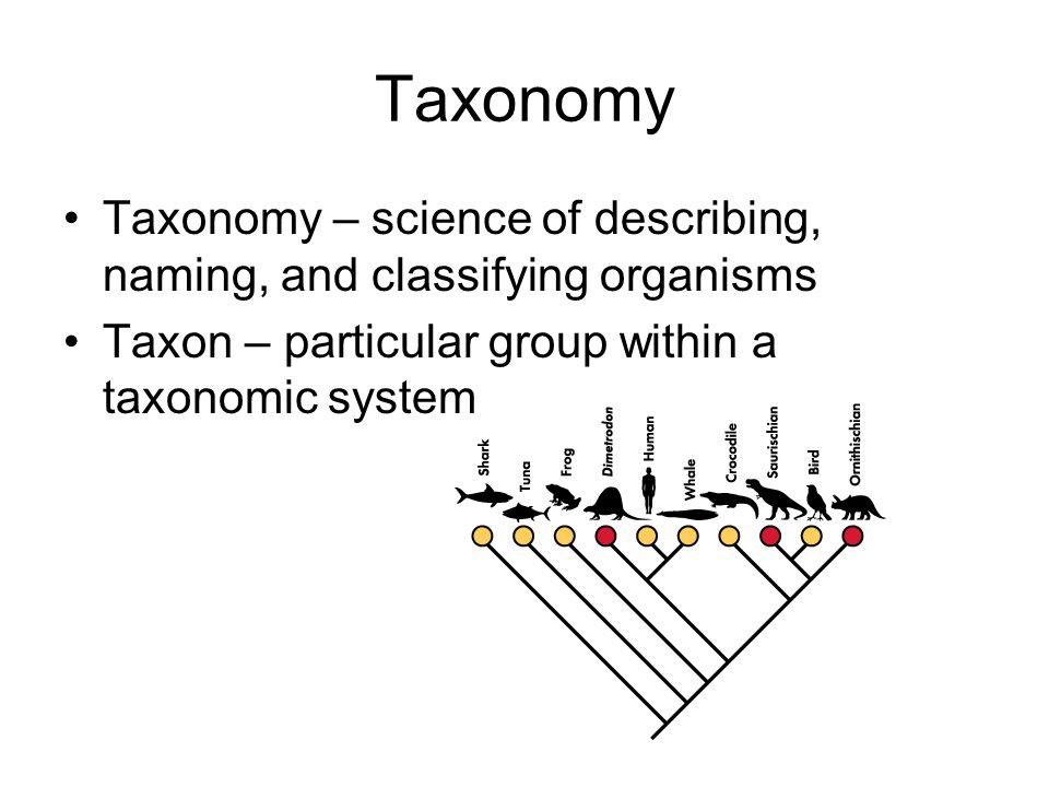 Taxonomy Taxonomy – science of describing, naming, and classifying organisms Taxon – particular group within a taxonomic system