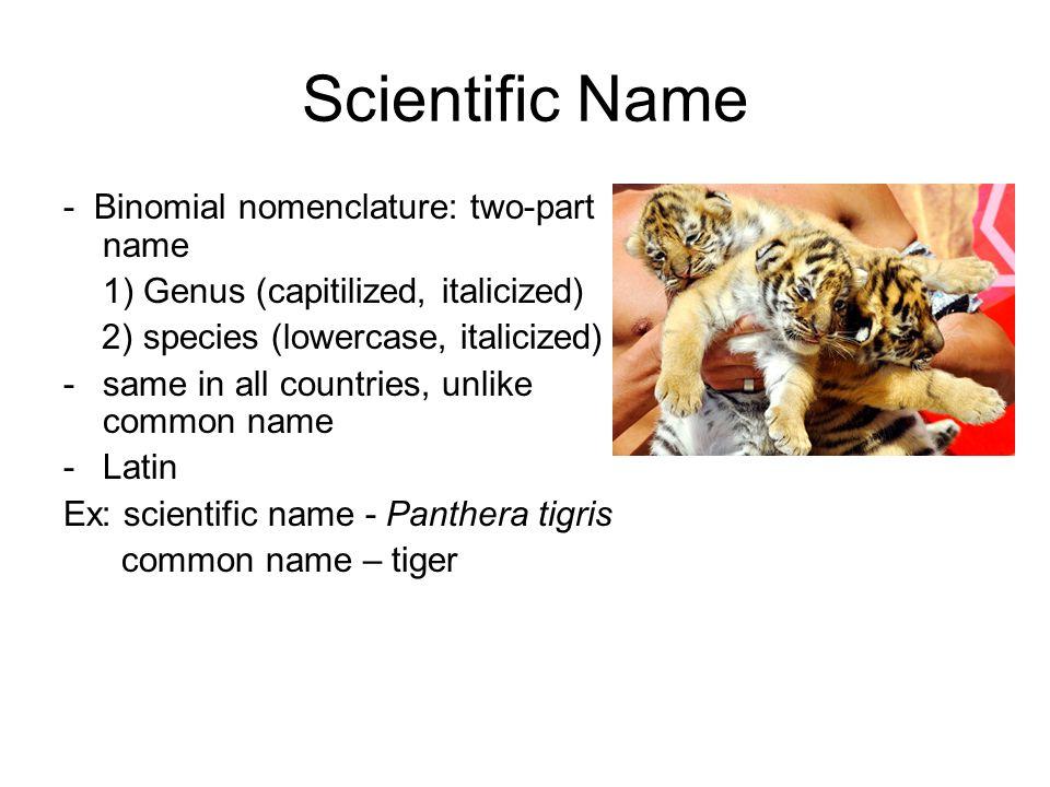 Scientific Name - Binomial nomenclature: two-part name 1) Genus (capitilized, italicized) 2) species (lowercase, italicized) -same in all countries, u