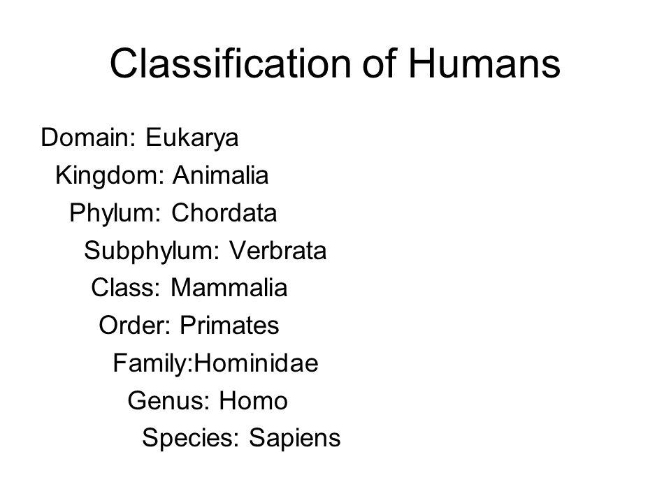Classification of Humans Domain: Eukarya Kingdom: Animalia Phylum: Chordata Subphylum: Verbrata Class: Mammalia Order: Primates Family:Hominidae Genus