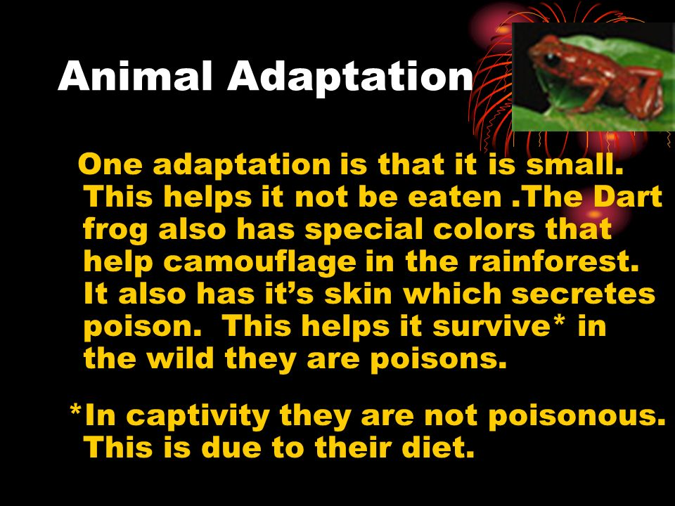 Animal Adaptation One adaptation is that it is small. This helps it not be eaten.The Dart frog also has special colors that help camouflage in the rai
