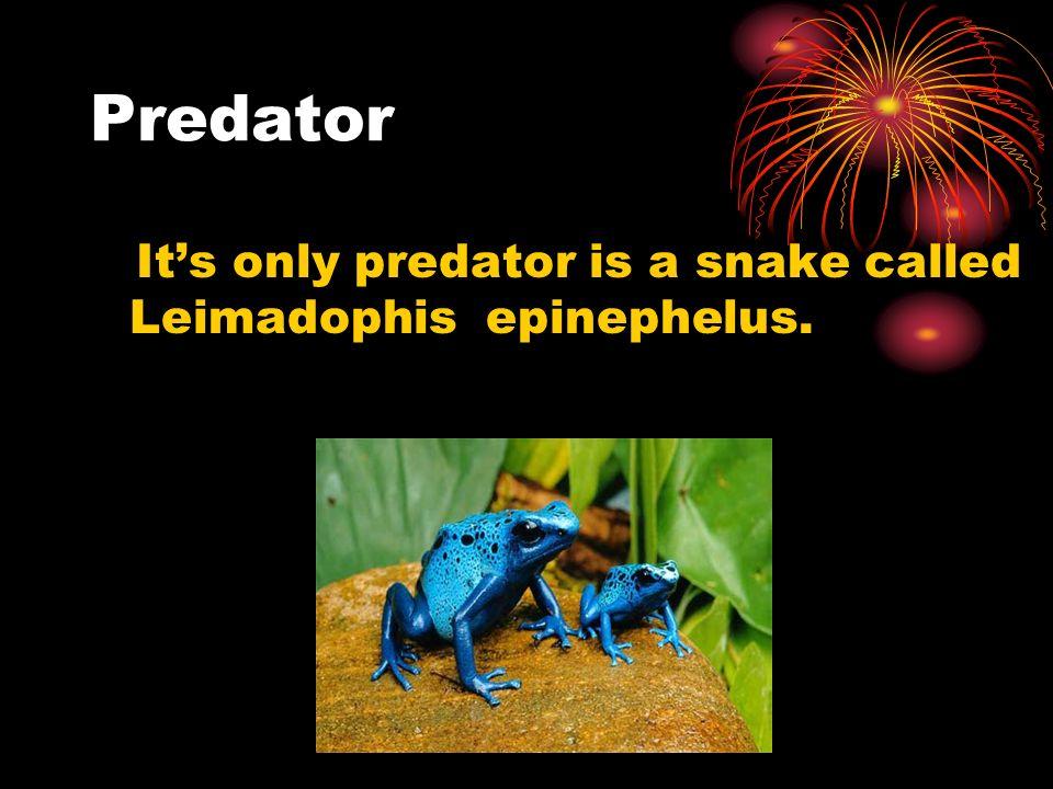 Predator Its only predator is a snake called Leimadophis epinephelus.