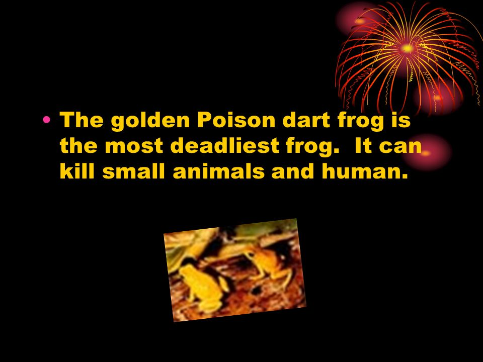 The golden Poison dart frog is the most deadliest frog. It can kill small animals and human.